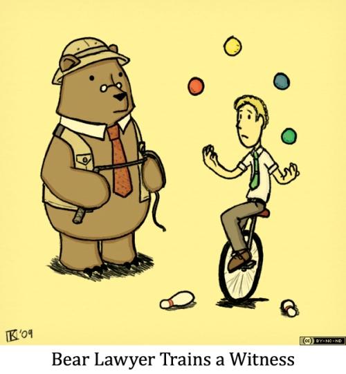 Bear Lawyer Trains a Witness