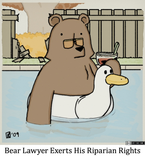 Bear Lawyer Exerts His Riparian Rights