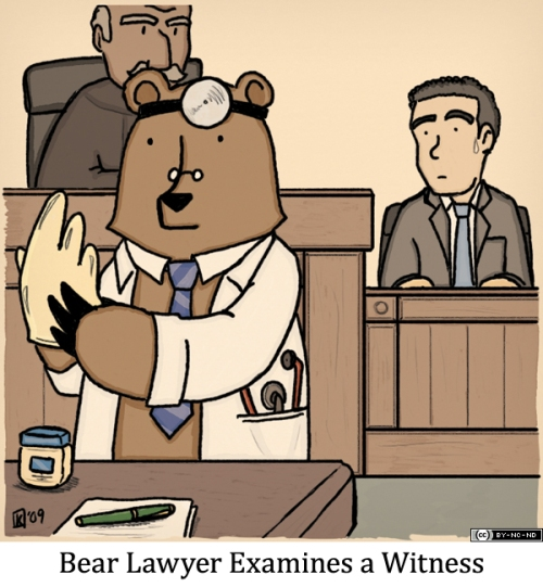 Bear Lawyer Examines a Witness