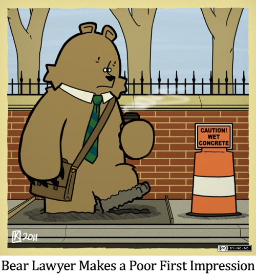 Bear Lawyer Makes a Poor First Impression