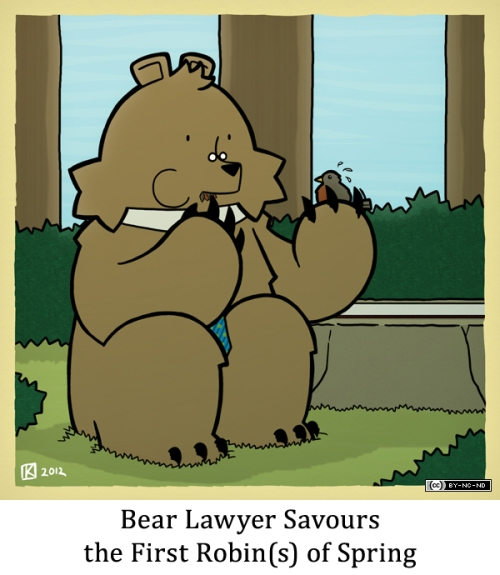 Bear Lawyer Savours the First Robin(s) of Spring